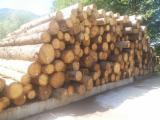 Nadelrundholz Zu Verkaufen - Tanne 25-50 cm ABCD level Schälfurnierstämme Slowenien zu Verkaufen