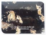 批发经涂饰及处理的木制品 - 胶卷