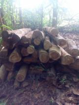 Ghana - Fordaq Online Markt - Stämme Für Die Industrie, Faserholz, Teak