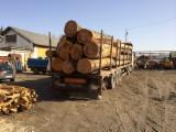 Servicii De Transport Lemn - Transport material lemnos , transport forestier , busteni, laturoaie - cu macara cu remorca, sau cu racoanta .