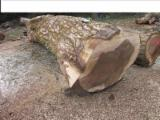 Greece Supplies - Walnut Logs 50 cm