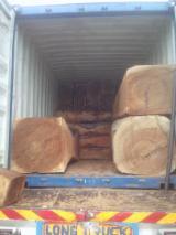 Ghana - Fordaq Online market - Supplier of Teak / Rosewood Industrial Logs