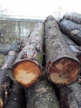 Niederlande - Fordaq Online Markt - Schnittholzstämme, Kirsche