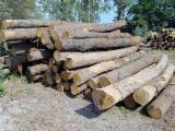 Kaufen Oder Verkaufen  Fassholz Hartholz  - Fassholz, Eiche, Roteiche