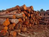 Eucalyptus Hardwood Logs - Eucalyptus Saw Logs, diameter 14+ cm