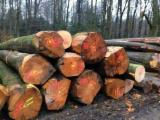 European White Oak Logs, diameter 30-39; 40+ cm