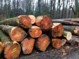 Schnittholzstämme, Eiche
