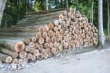 Grand Fir Softwood Logs - Noble / Grand Fir Industrial Logs