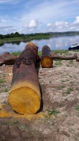Wälder Und Rundholz Nordamerika - Schnittholzstämme
