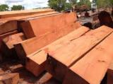 Hardwood Logs importers and buyers - Request Musivi, Kosso Square Logs 20+ cm
