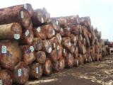 Hardwood Logs importers and buyers - Need Tali Logs 30-40 cm
