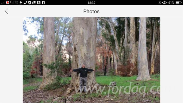 Karri-Woodland-4000