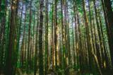 Servizi Forestali - Stima della massa legnosa in piedi