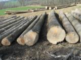 Hardwood Logs importers and buyers - Need Ash Logs 35+ cm