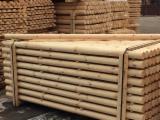 Drewno Iglaste  Kłody Na Sprzedaż - Belki Konstrukcyjne Okrągłe, Sosna Zwyczajna  - Redwood, FSC