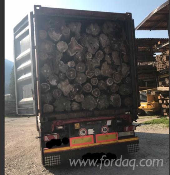 Selling-Teak-Saw-Logs--ABC