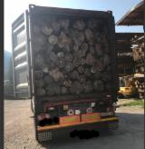 Forest and Logs - 280 mm Teak Saw Logs Italy