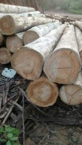 Hardwood Logs Suppliers and Buyers - Eucalyptus Round Logs 40-70 cm
