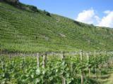 Résineux  Grumes À Vendre - Poteaux déchiquetés pour le vignoble