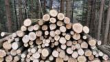 See Woodlands For Sale Worldwide. Buy Directly From Forest Owners - Spruce  Woodland 1-100 ha
