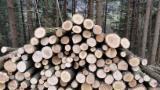 Woodlands - Spruce  Woodland 1-100 ha