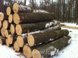 Hardwood Logs importers and buyers - Looking for Ash Logs