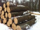 Wälder und Rundholz - Schnittholzstämme, Esche