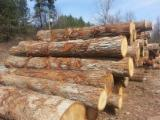 Hardwood Logs importers and buyers - Need Red Oak Logs 60cm