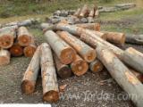 Wälder und Rundholz - Schnittholzstämme, Buche