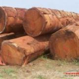 Wälder und Rundholz - Schnittholzstämme, Doussie