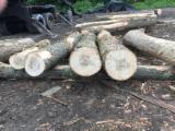Hardwood  Logs For Sale - Hard Maple Saw Logs, diameter 12 inches