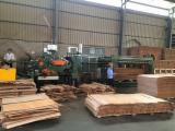 Rotary Cut Veneer - Rotary Cut Dried Eucalyptus Veneer 2.1 mm