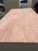 Find best timber supplies on Fordaq - 4.5mm One Time Hotpress Bintangor Plywood for Packing