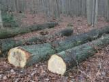 Hardwood Logs importers and buyers - Looking to Buy White Oak, Red Oak and Beech Logs, diameter 30 cm
