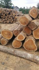 Forêts et Grumes - Vend Grumes De Sciage Teak COSTA