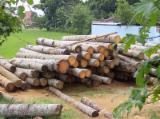 Wälder und Rundholz - Stämme Für Die Industrie, Faserholz