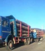 null - Kamion Za Prevoz Kraćih Stabala Polovna Rumunija