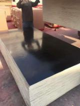 Plywood Supplies - Best prices, 18mm finger joint film faced plywood mr glue