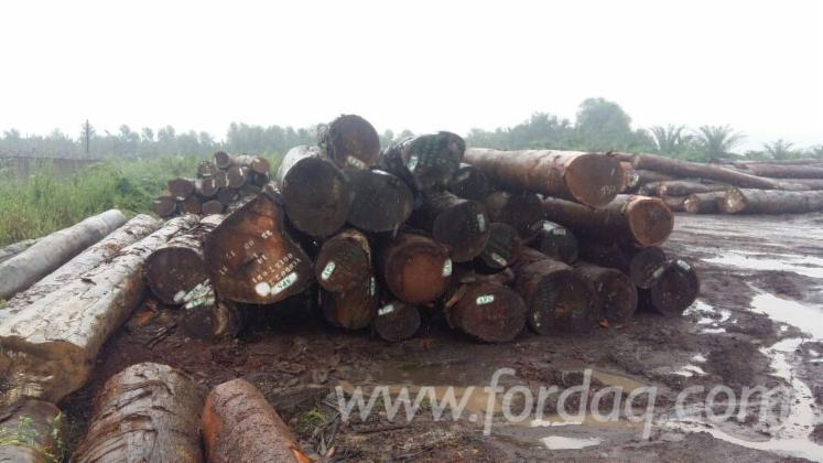 Tali---Padouk---Sapelli-Industrial-Logs-70-