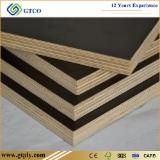 Birch Core 9-25 mm Brown Film Faced Plywood