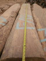 Hardwood Logs For Sale - Register And Contact Companies - African Kossowood/ Rosewood