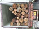 Troncos De Madera Blanda en venta - Venta Troncos Para Aserrar Southern Yellow Pine Estados Unidos 美国佐治亚