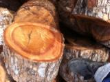 Firewood, Pellets And Residues - Firewood - Chinkapin Cleaved Firewood