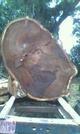 Colombia Hardwood Logs - Selling Saman Saw Logs, diameter 60 cm