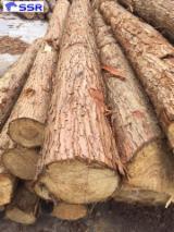 1 Schicht Massivholzplatten, Northern White Cedar