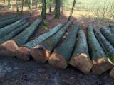 Laubrundholz  Esche Weiß- - Schnittholzstämme, Esche , Esche , Eiche