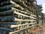 ISO-9000 Certified Softwood Logs - Maritime Pine Stakes