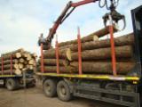 Germany Hardwood Logs - Lime Logs 20+ cm