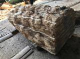 Laubholz  Blockware, Unbesäumtes Holz Ukraine - Blockware, Pappel