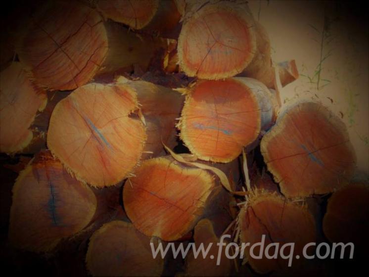 Acacia-Logs-7-12